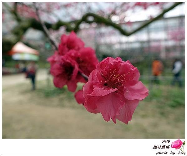 2018梅峰農場 (314)