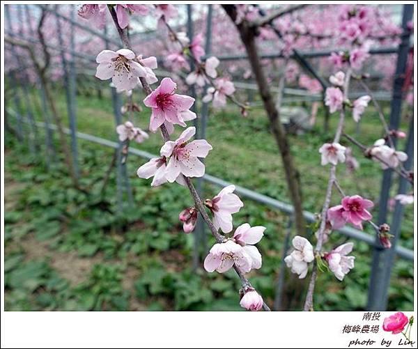 2018梅峰農場 (304)