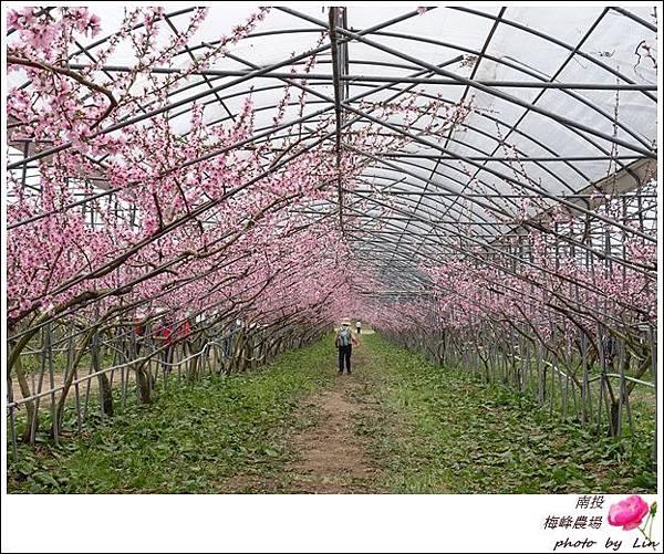 2018梅峰農場 (267)