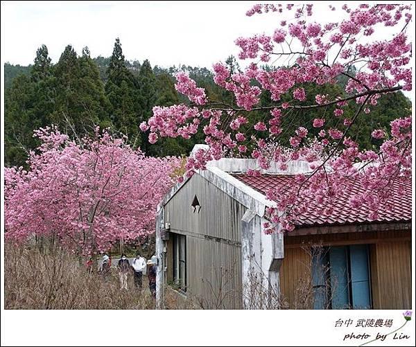 武陵農場 (6)