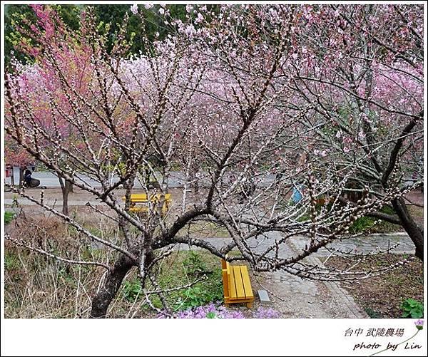 武陵農場 (23)