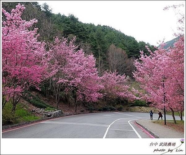 武陵農場 (1)