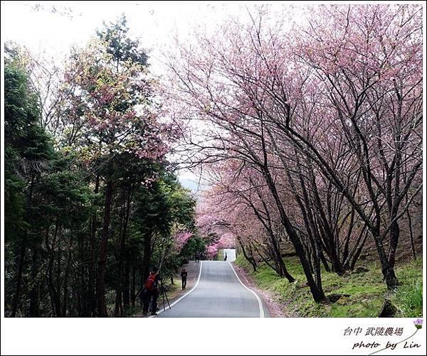 武陵農場 (55)