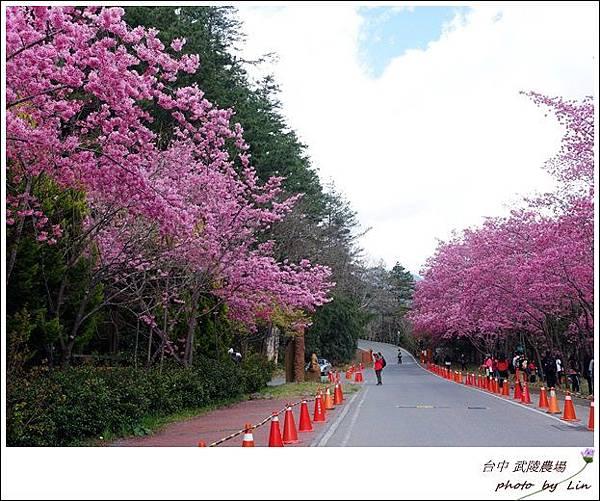 武陵農場 (113)