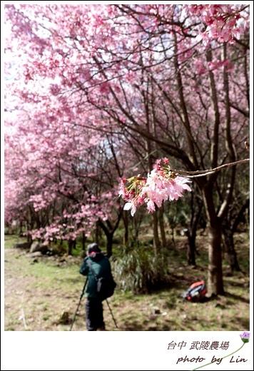 武陵農場 (69)