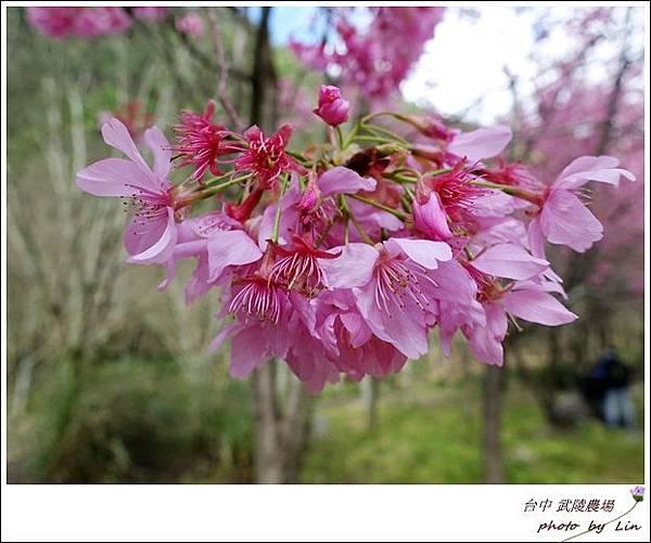 武陵農場 (89)