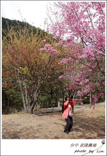 武陵農場 (148)