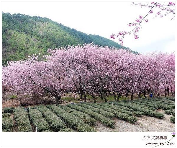 武陵農場 (182)