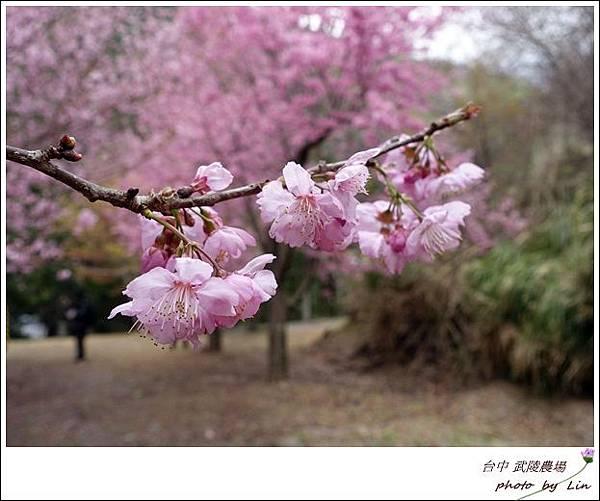 武陵農場 (149)