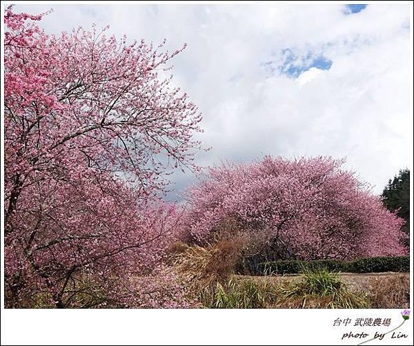 武陵農場 (130)