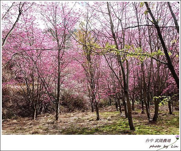 武陵農場 (127)