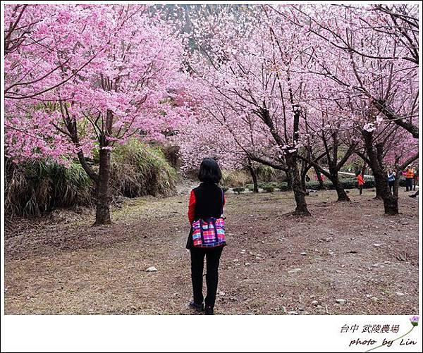 武陵農場 (136)