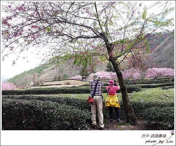 武陵農場 (277)