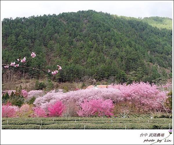 武陵農場 (203)