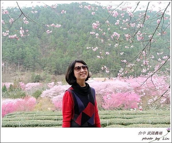 武陵農場 (225)