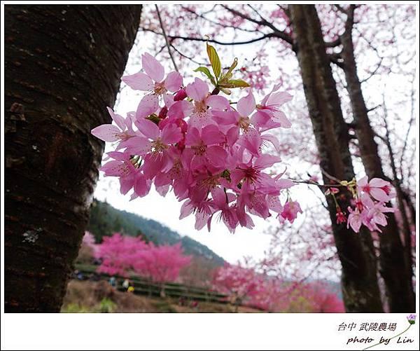 武陵農場 (256)