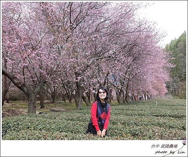 武陵農場 (272)