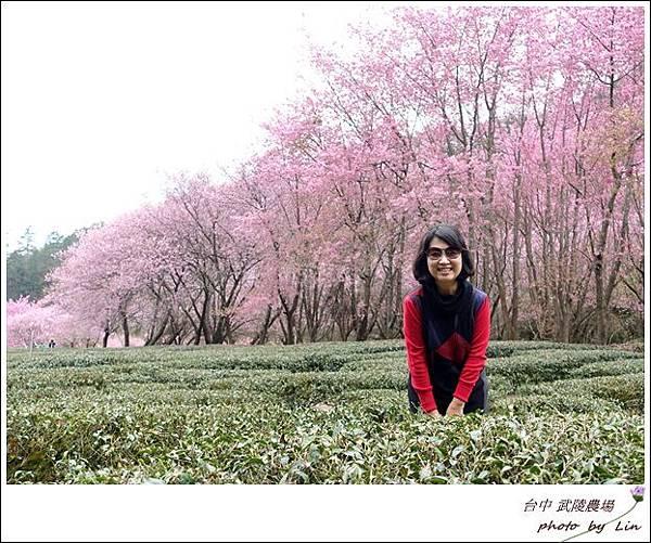 武陵農場 (246)