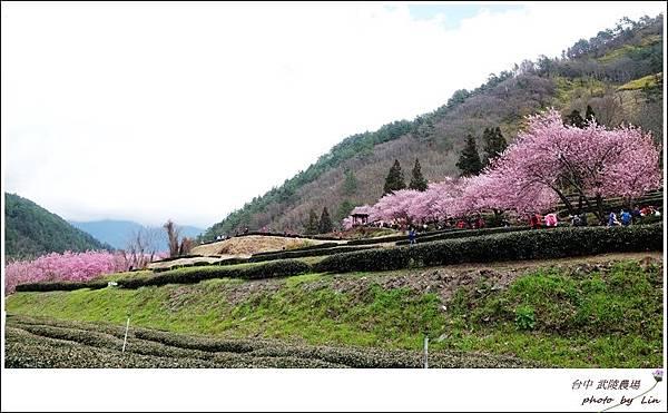 武陵農場 (286)