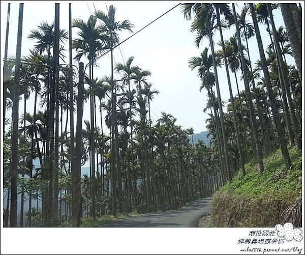 連興露營32露 (260)