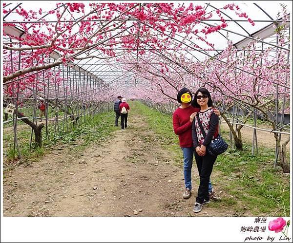 2018梅峰農場 (328)-1