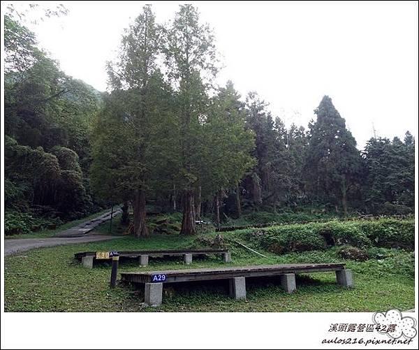 溪頭露營區42露 (240).JPG