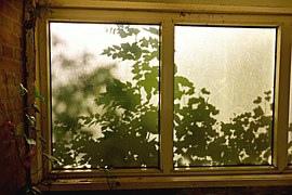 window-1509903__180.jpg