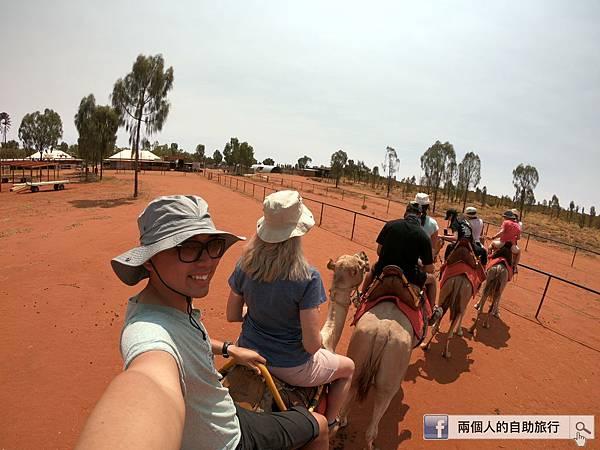 澳洲 駱駝.JPG