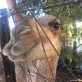 camel baby.jpeg