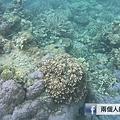 科隆 珊瑚礁.png