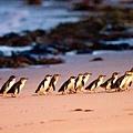 菲利浦島 企鵝島.jpg