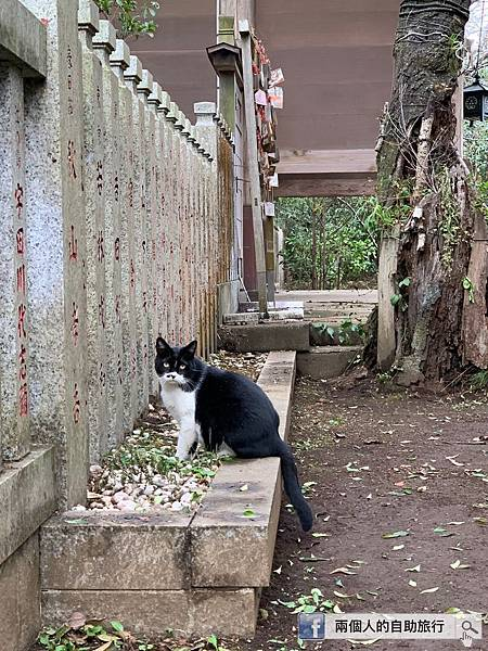 江之島 野貓.jpeg