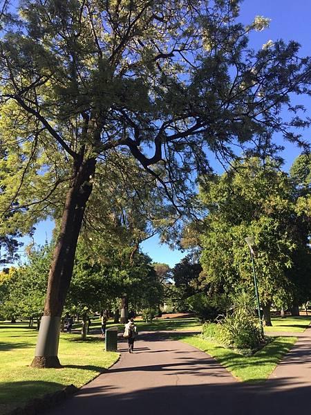 Fitzroy Garden.jpeg