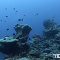 綠島 柴口 黑毛礁.png