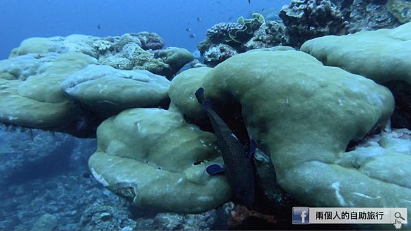 綠島 柴口 黑毛礁 魚睡覺.png