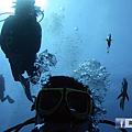綠島 鋼鐵礁 魚從頭上游過.png