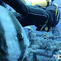 綠島 鋼鐵礁 燕魚亂入.png