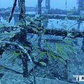 綠島 鋼鐵礁 擬羊魚.png