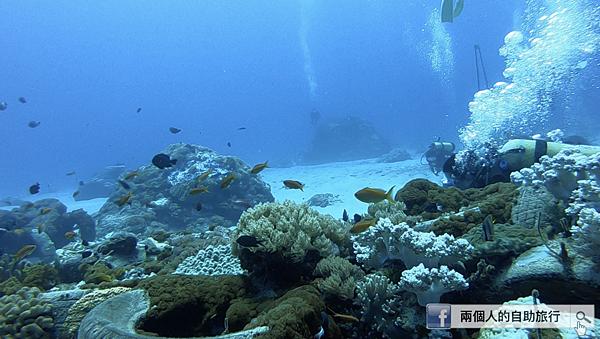 綠島 大香菇 輪胎礁.png