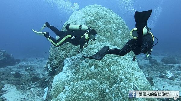 石朗 潛水 硬珊瑚.png