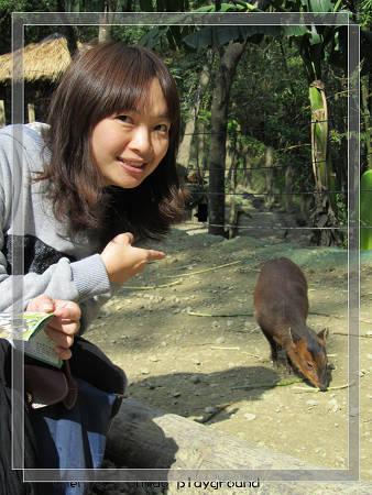 可愛動物6.jpg