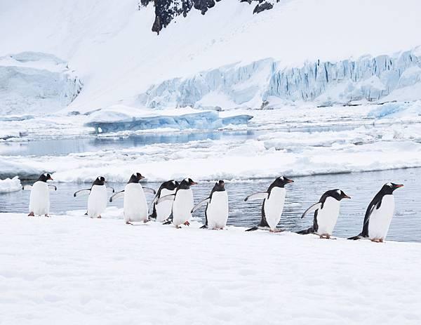 2016南極明信片-01.jpg