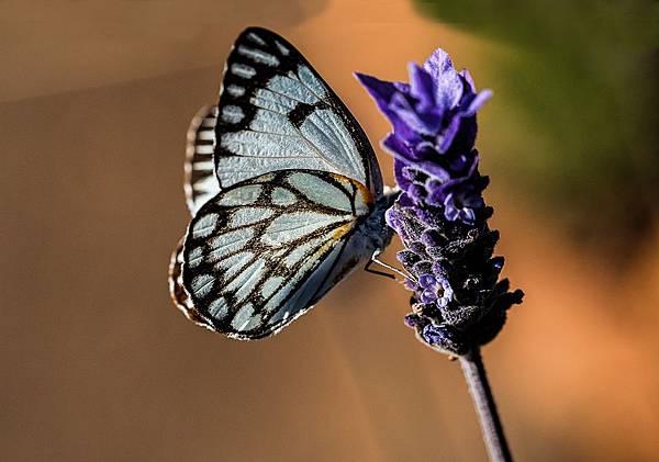 butterfly-374087_1280.jpg