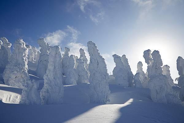 樹冰 (2).jpg