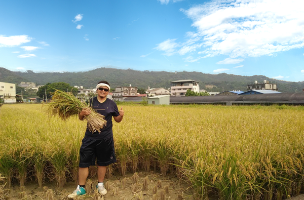 藍天空的稻田.png