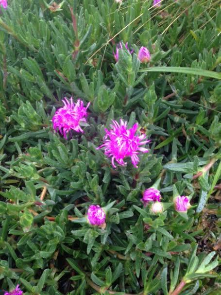Flower 88888