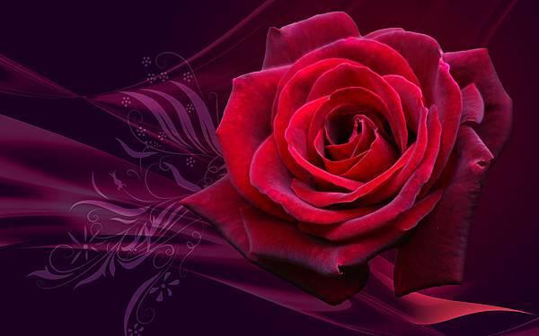 英國藍玫瑰花茶.jpg