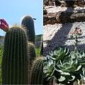 仙人掌植物園
