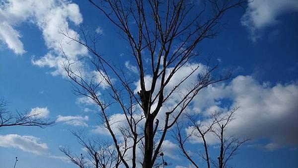 機場外的藍天白雲