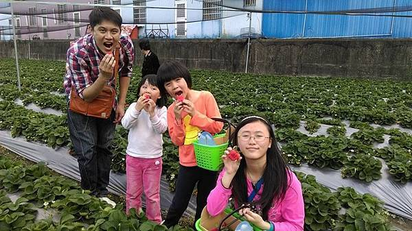 中社-採草莓.jpg